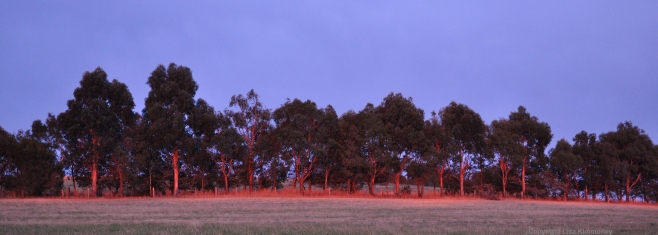 Sunrise on gums