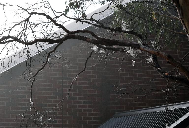 cobweb roof