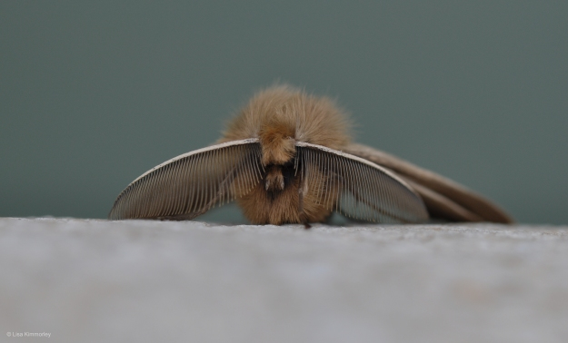 moth front 2