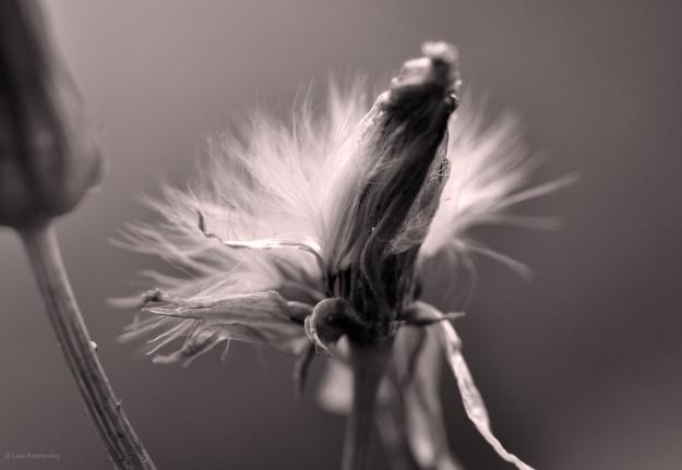 setting seed