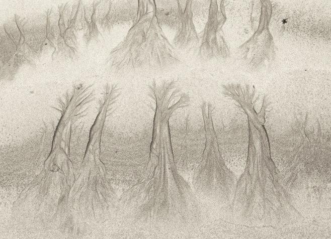 sand tree1