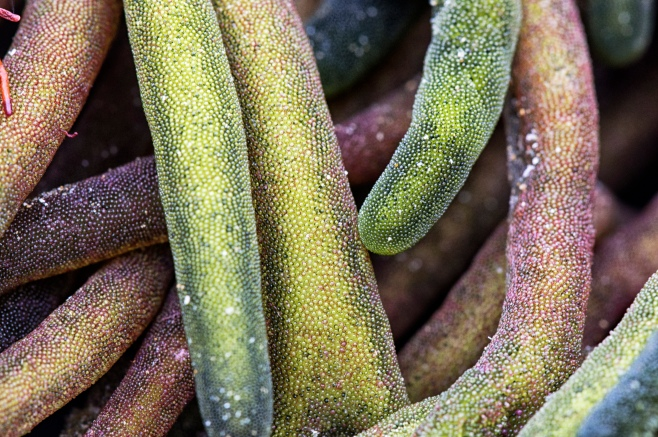 seaweed scifi