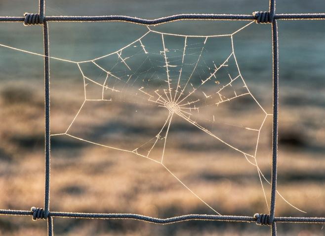 broken web1