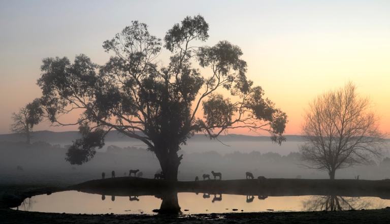 dawn dam 2