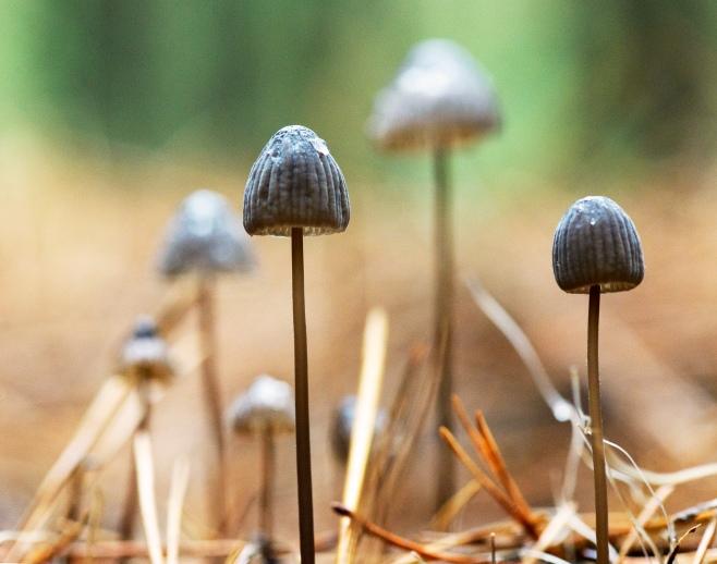 fungi4b